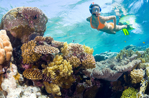 Guided Snorkeling for Two Over the Coral Reef